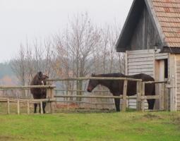 konie1.jpg